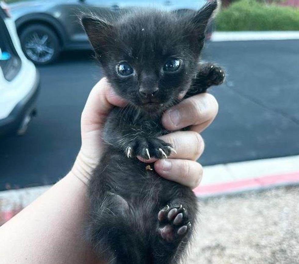 tiny palm sized kitten