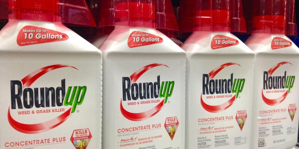 Appeals court rejects Bayer's bid to overturn Roundup trial loss, slams company for 'reckless disregard' for consumer safety