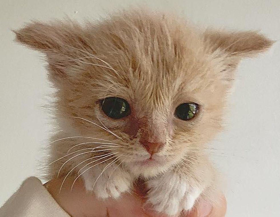 sweet kitten paws