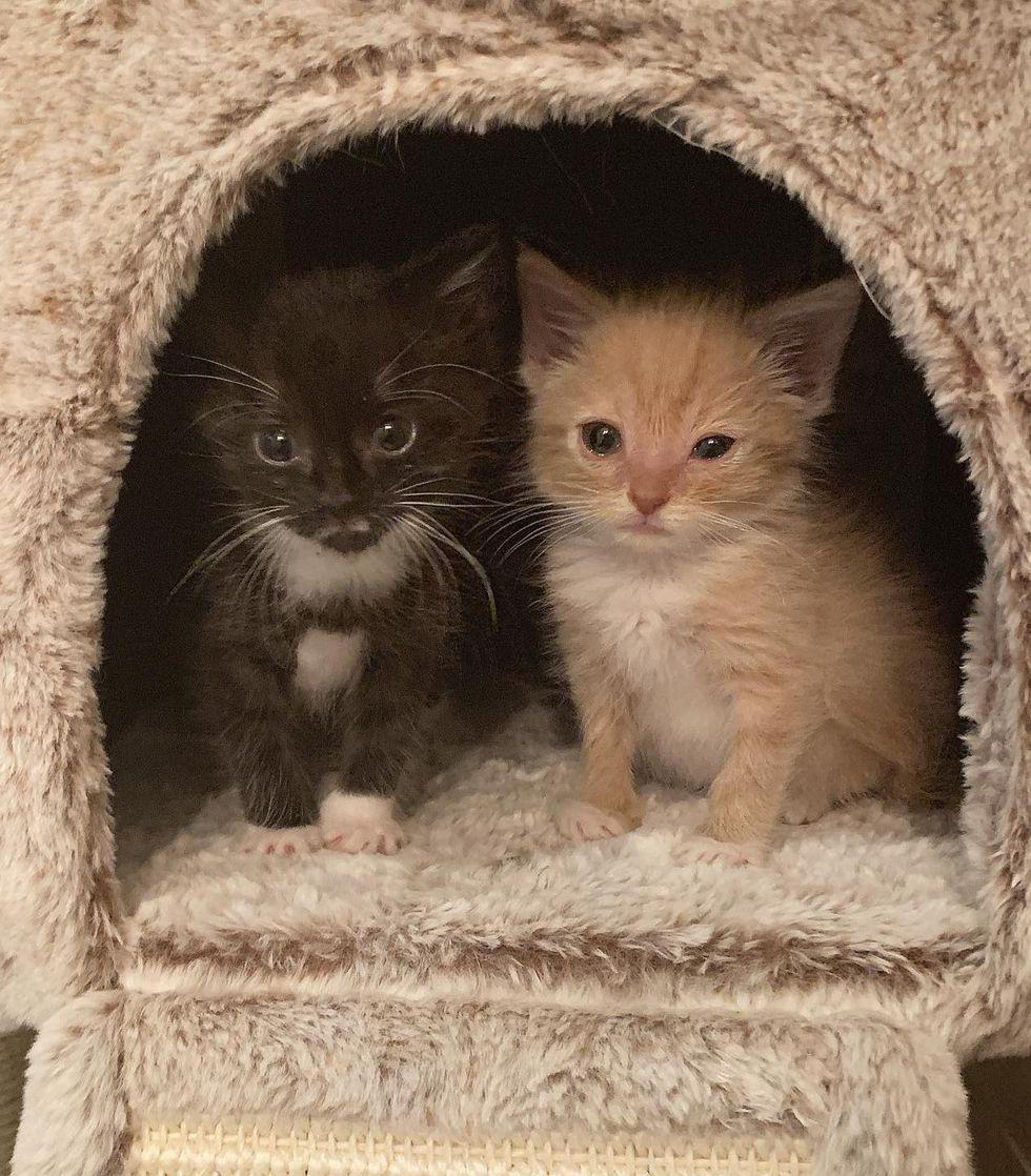 best friends kittens