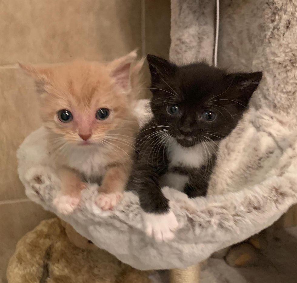 kittens cat tree