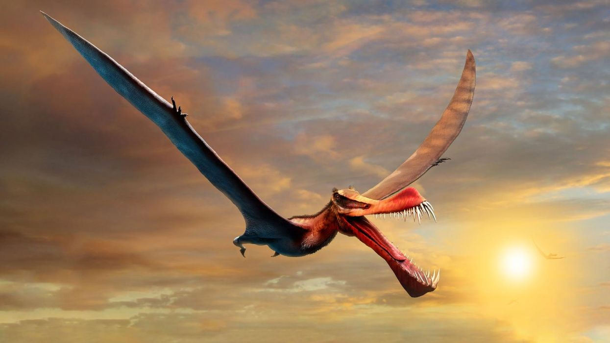 The most terrifying pterosaur yet is discovered