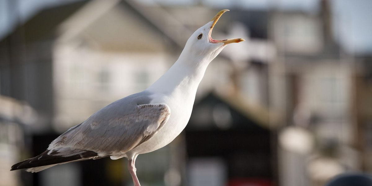 Mom Gets Revenge on Noisy Campers by Luring Squawking Seagulls Onto Roof at 7AM
