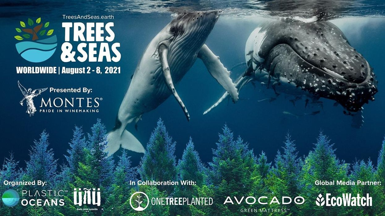First-Ever Trees & Seas Festival Launches Today