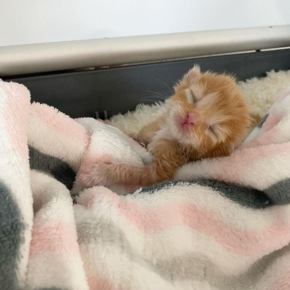 sleepy newborn kitten