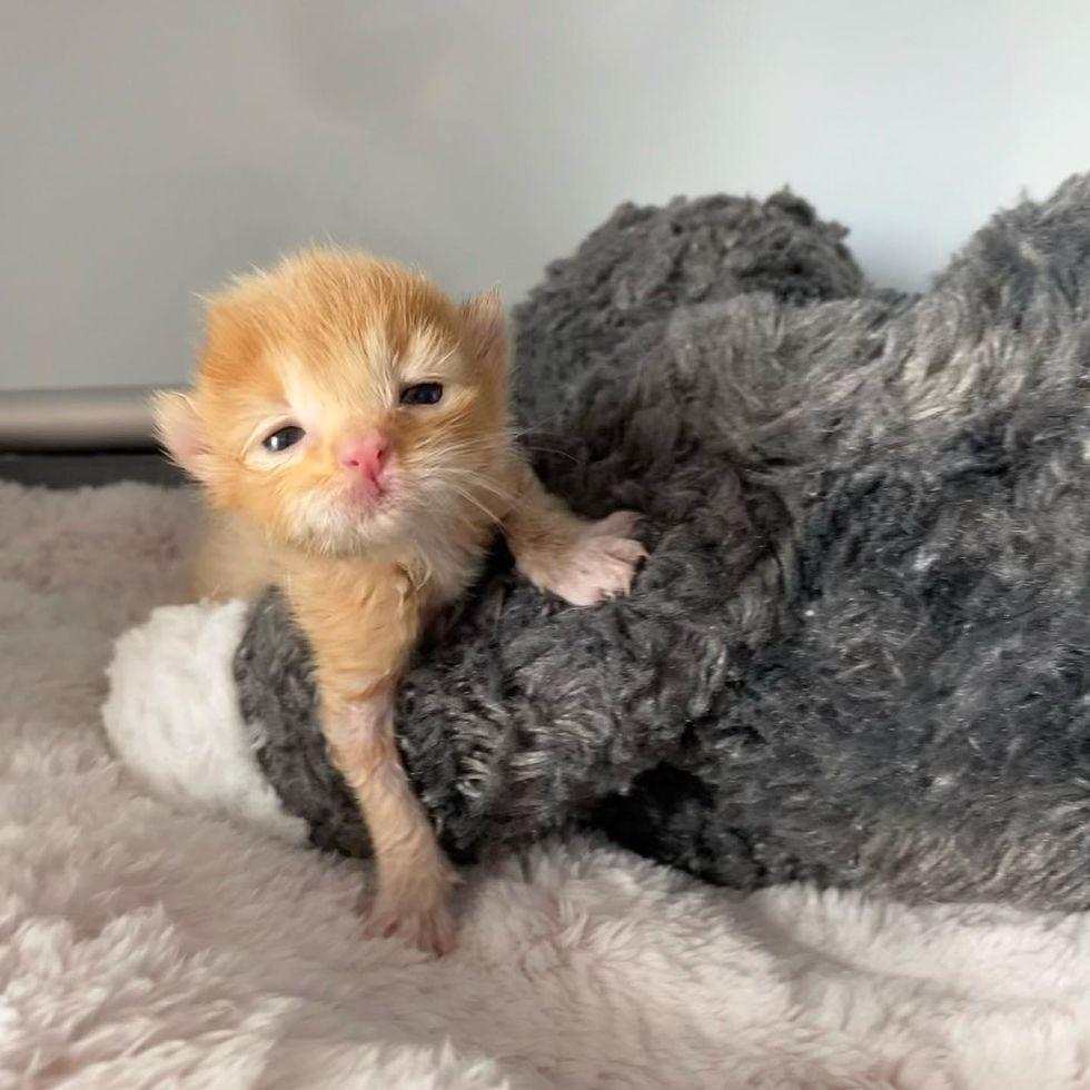 tiny ginger kitten