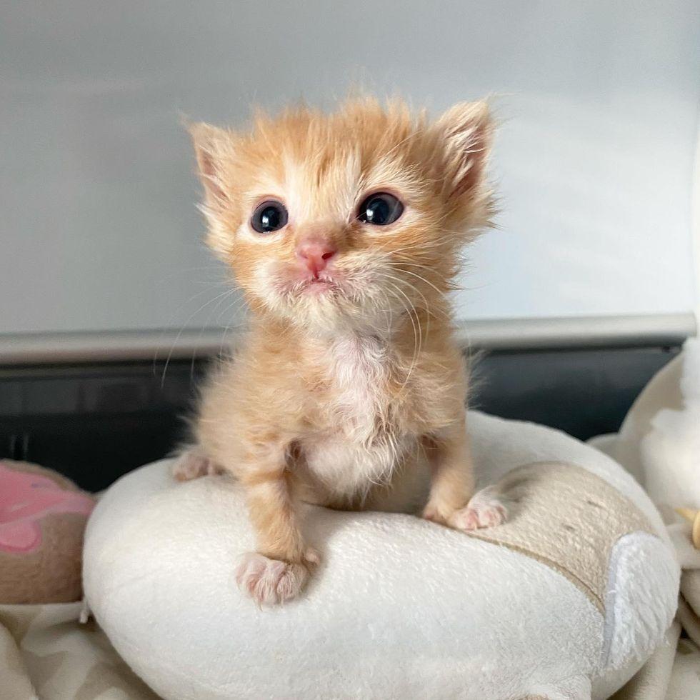 tiny mighty kitten