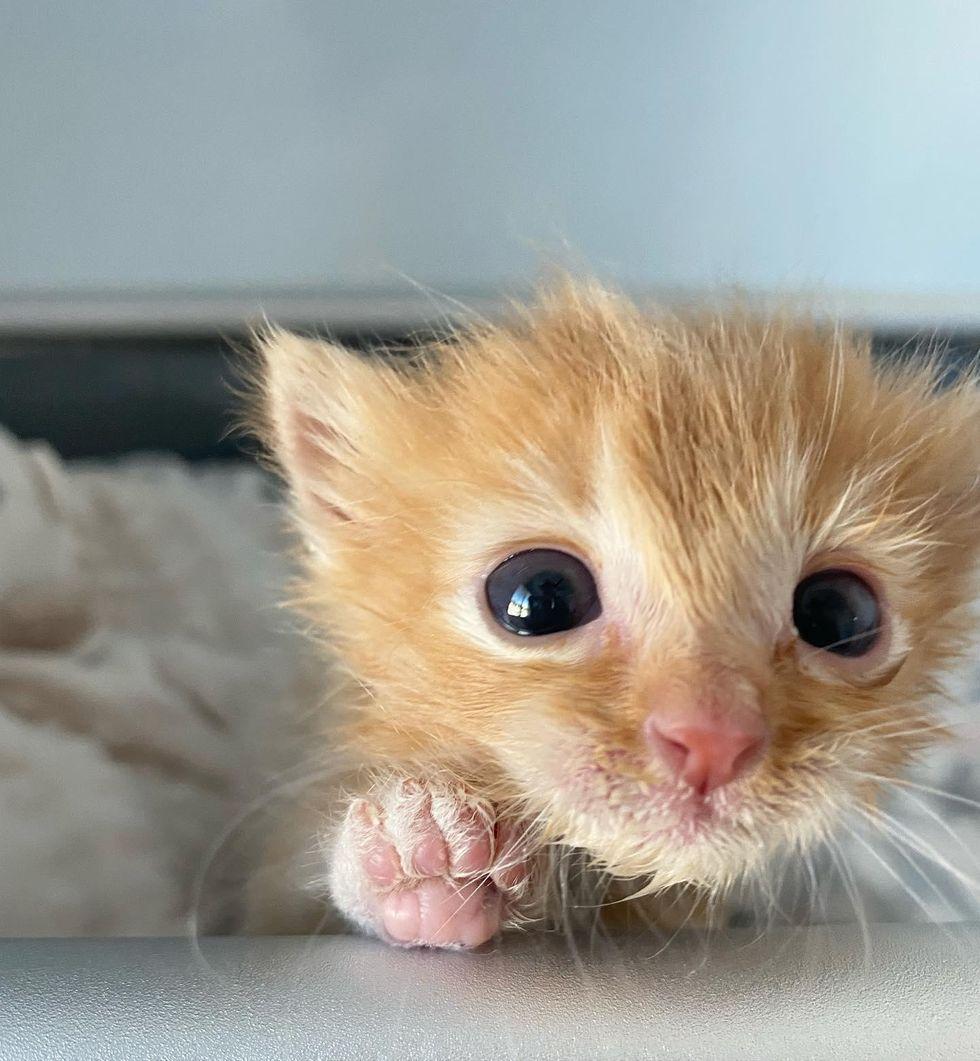 paw print kitten