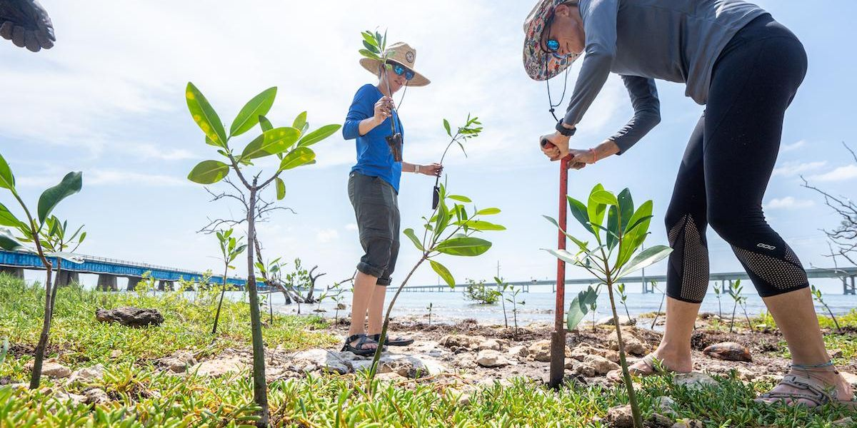 Why Planting Mangroves Can Help Save the Planet