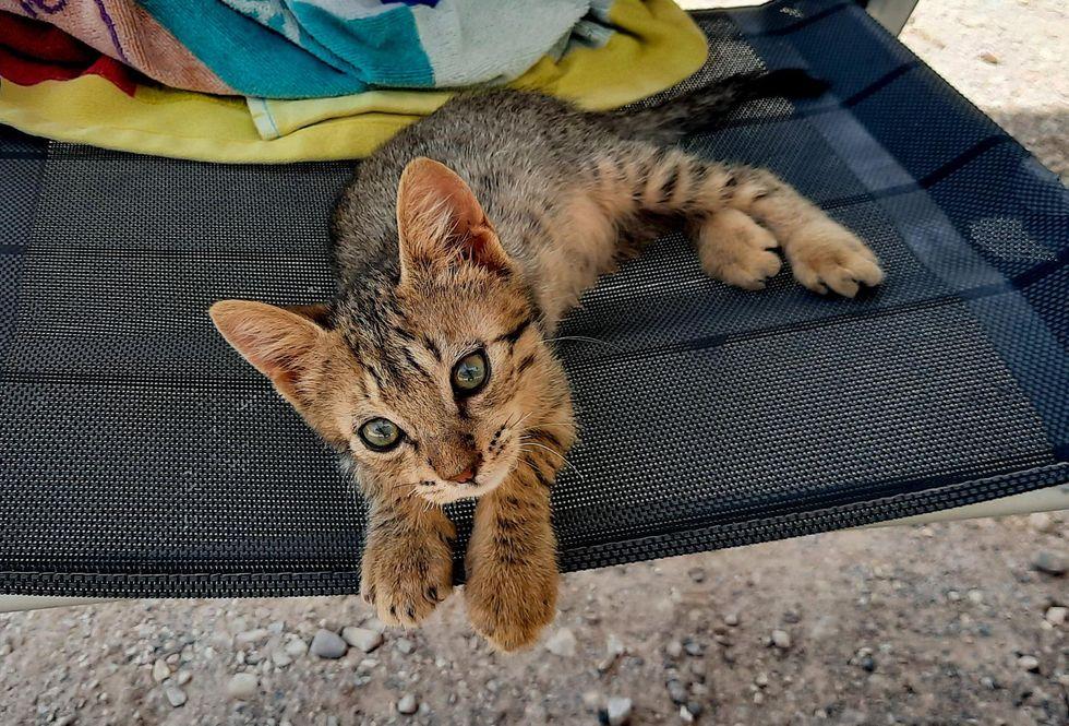 travel van kitty