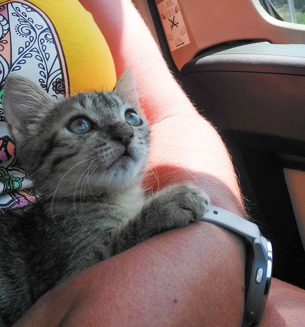 cuddly kitten in car