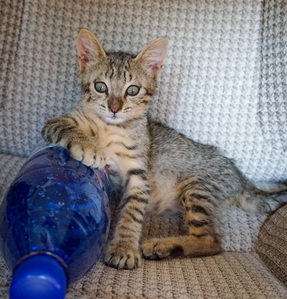 tabby kitten home