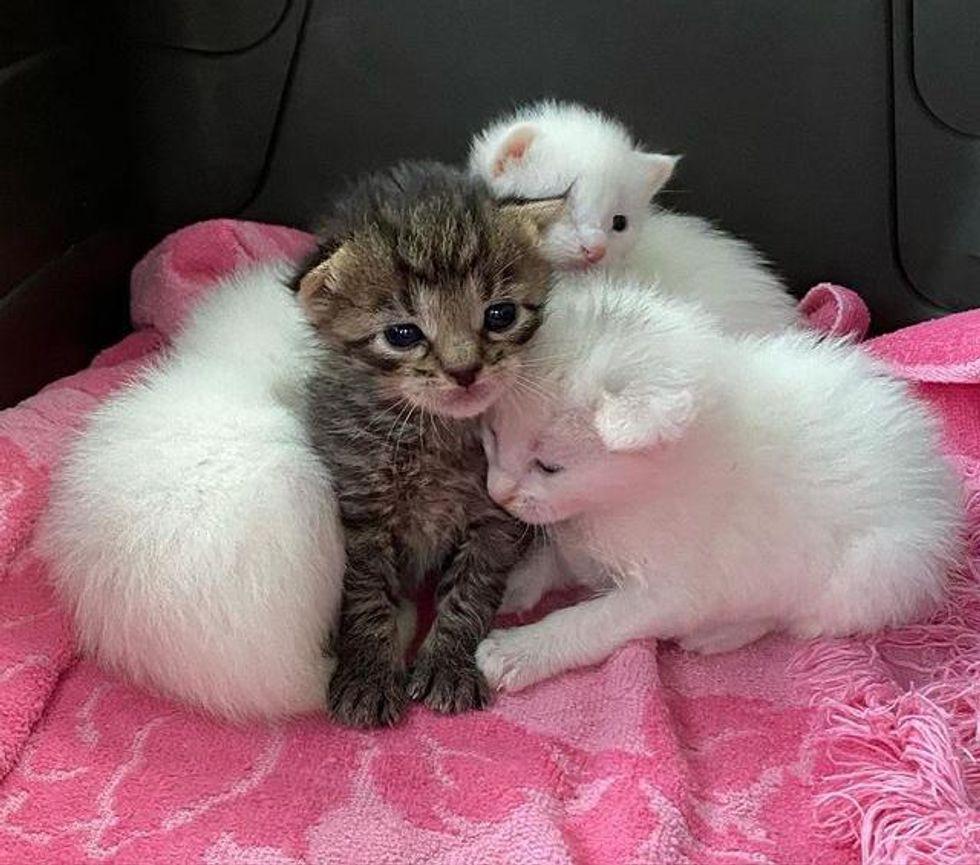 kittens huddling