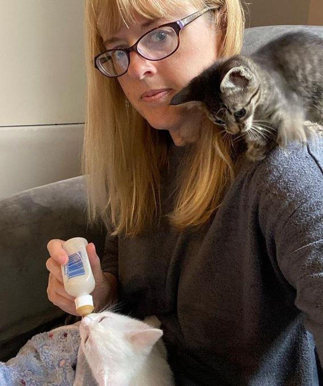 shoulder kitten