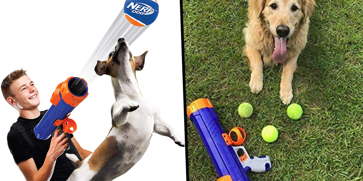 Dog Nerf Gun That Fires Balls Is a Must for Dog Owners