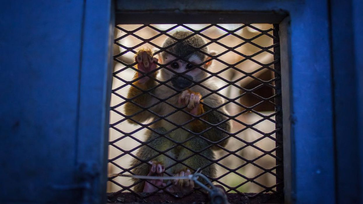 Weak Protections Fuel Surge in Wildlife Trafficking by Air Across Latin America