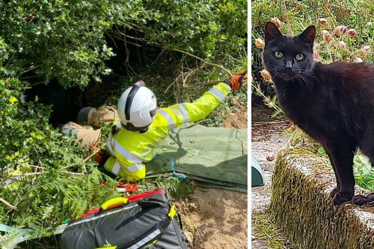 83-year-old woman's cat alerted rescuers after she fell down a 70 foot ravine