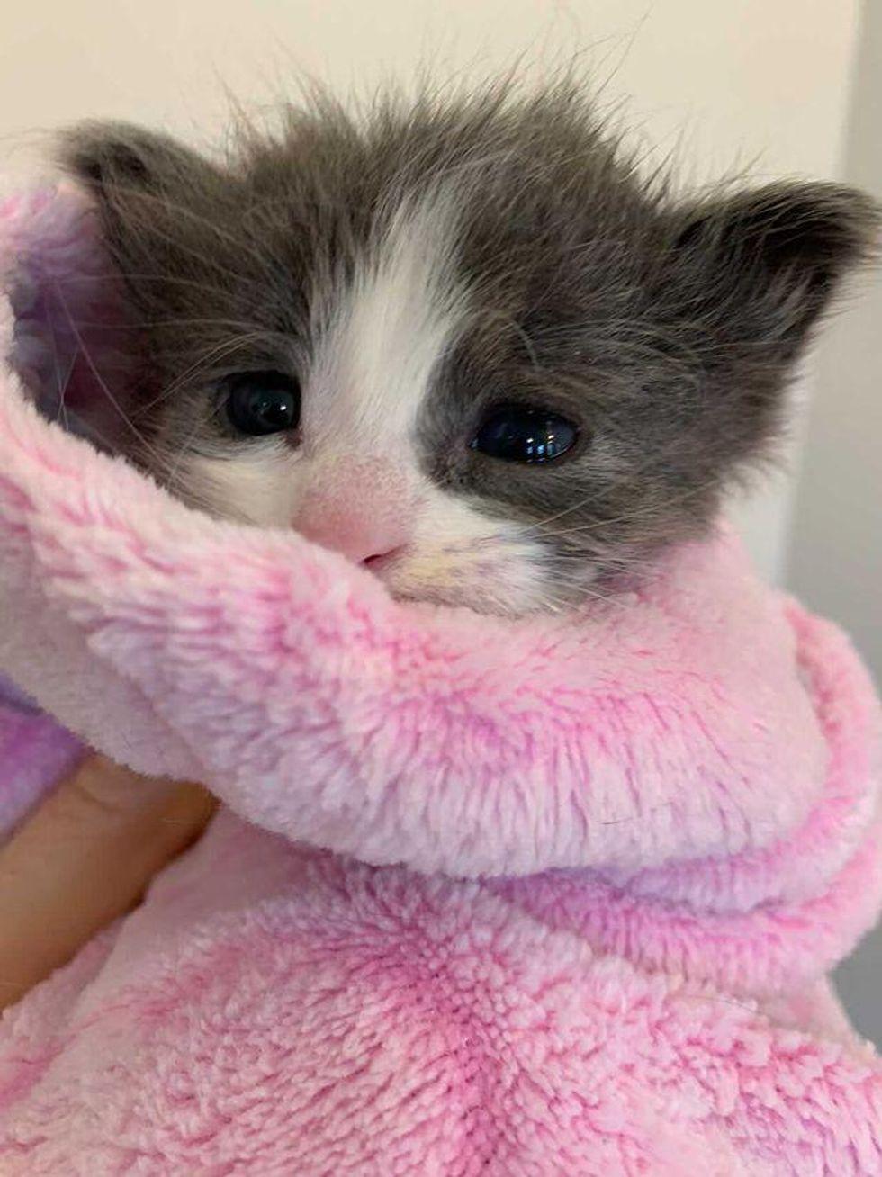 purrito kitten