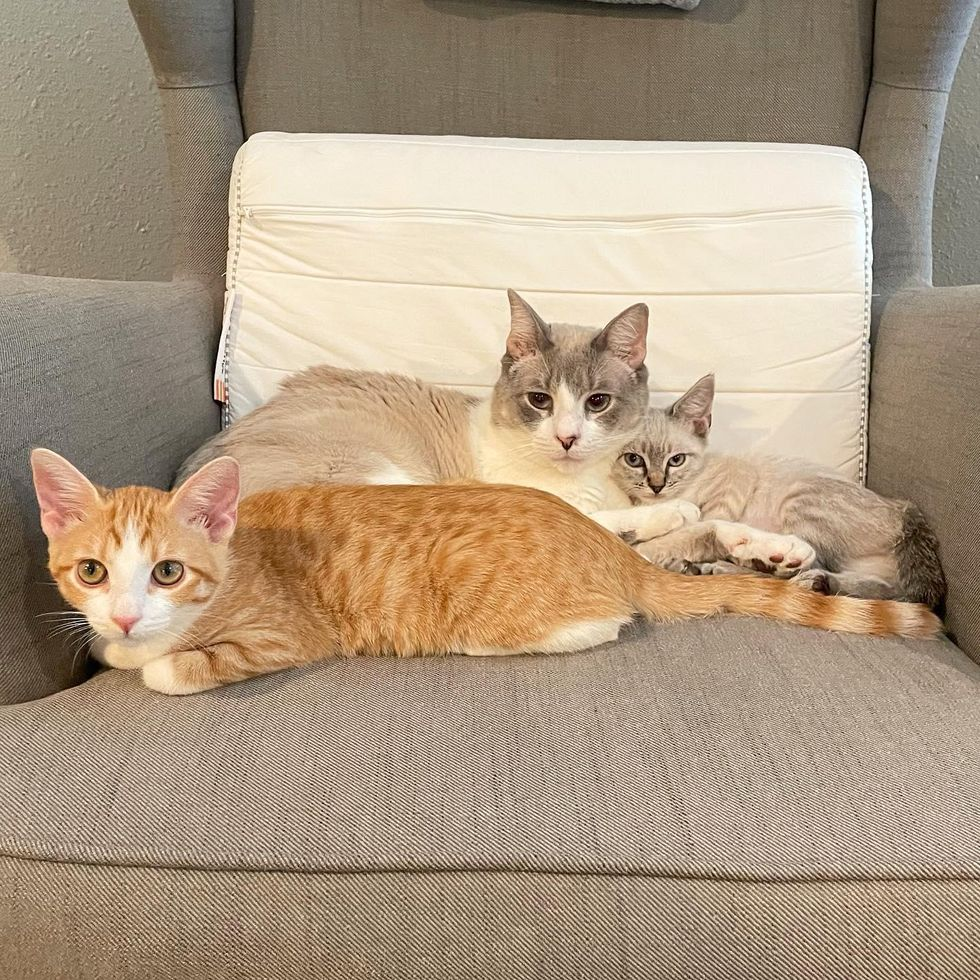 cuddle puddle cats