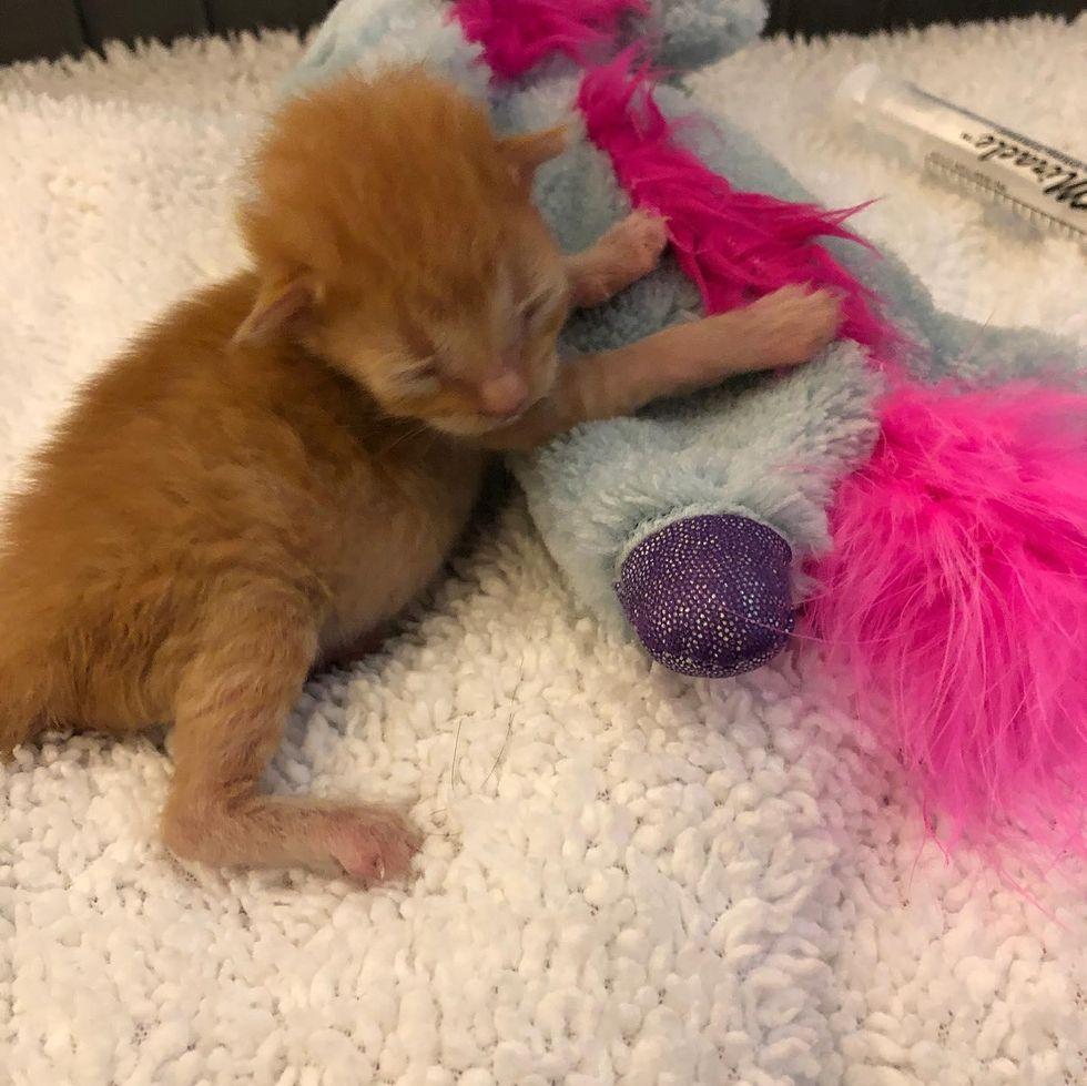 newborn orphan kitten