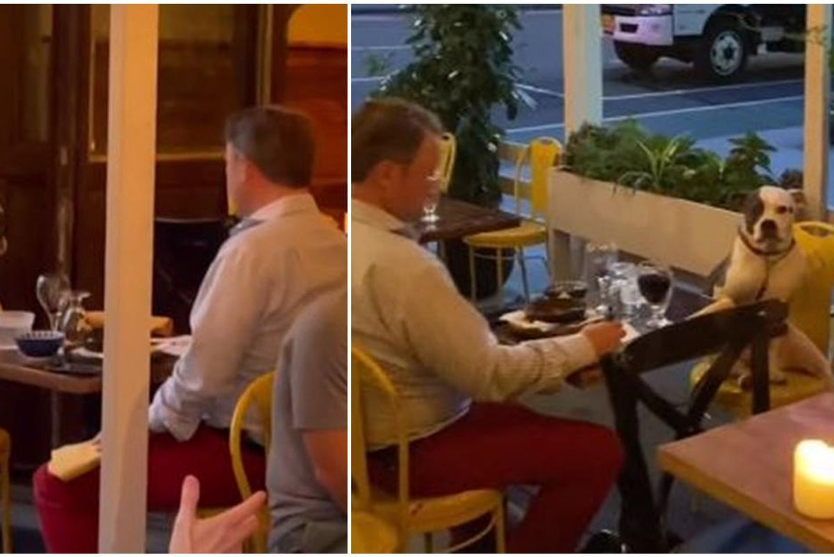 Diner captures heartwarming footage of a date between a man and his perfectly-trained dog