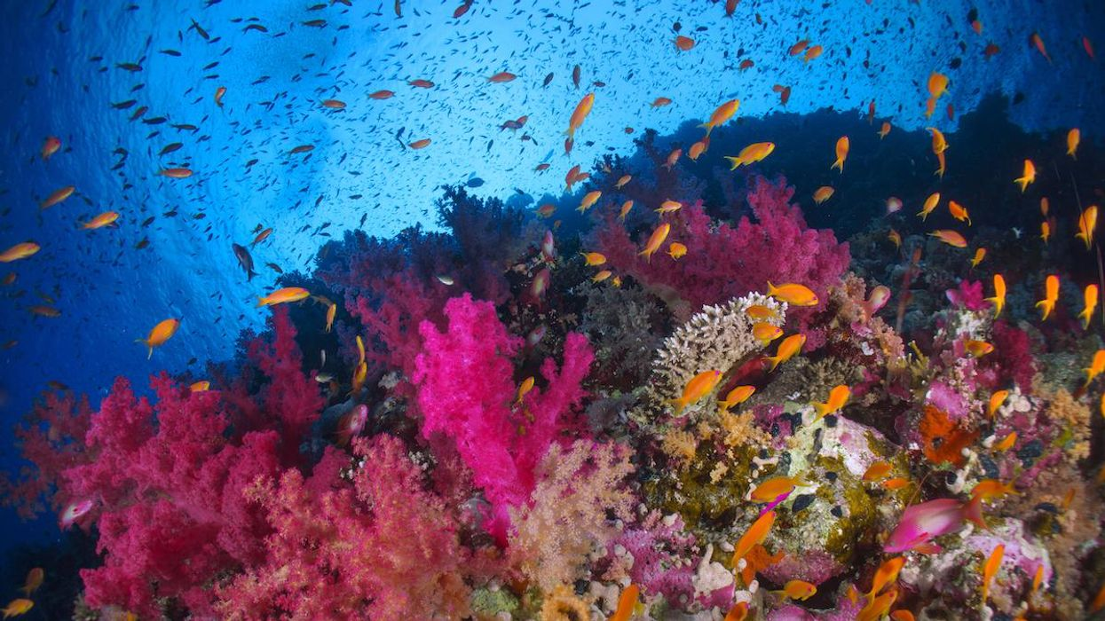 A biodiverse Marine Protected Area.
