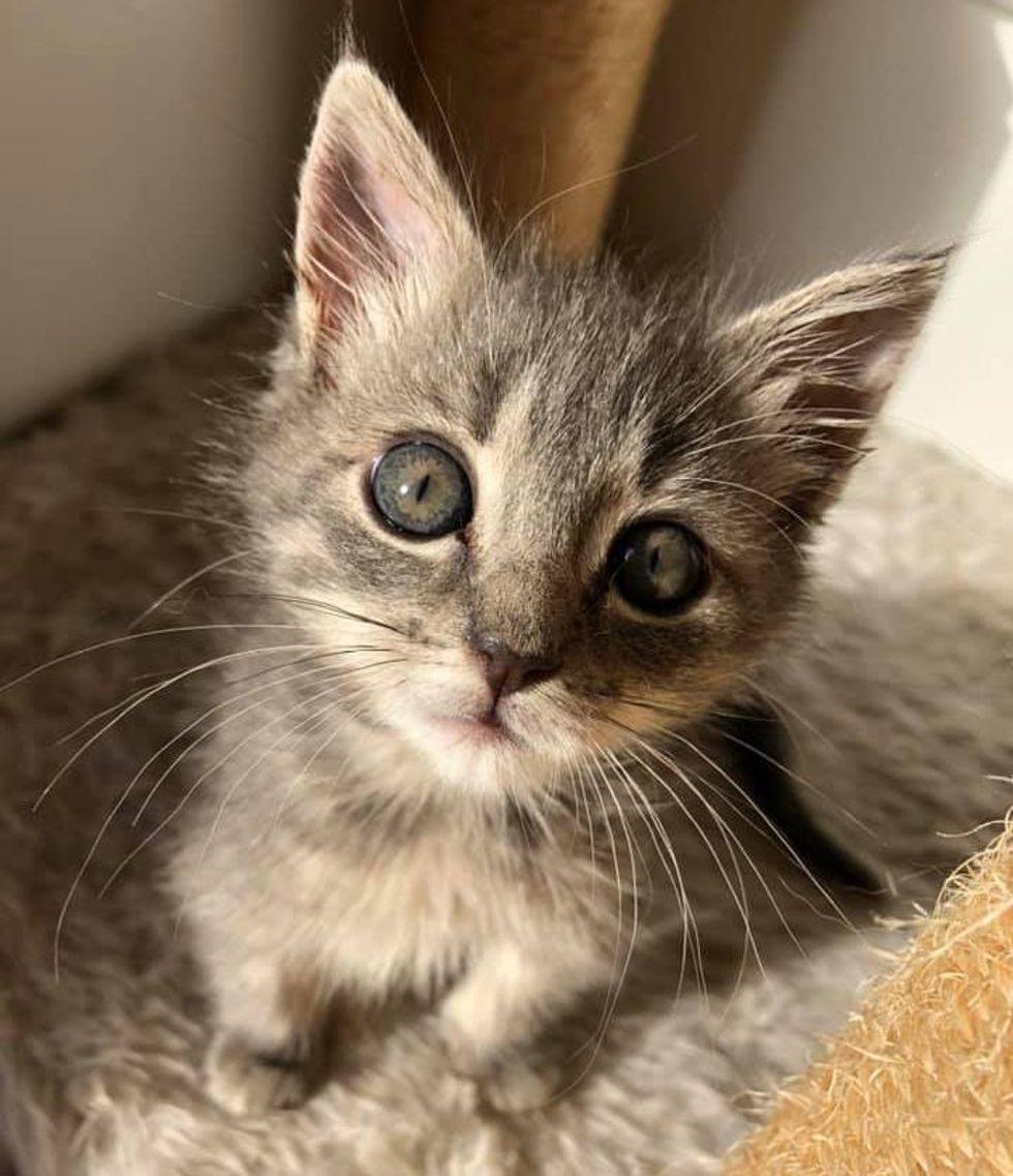tiny kitten cute