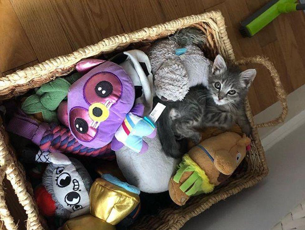 tiny kitten and toys