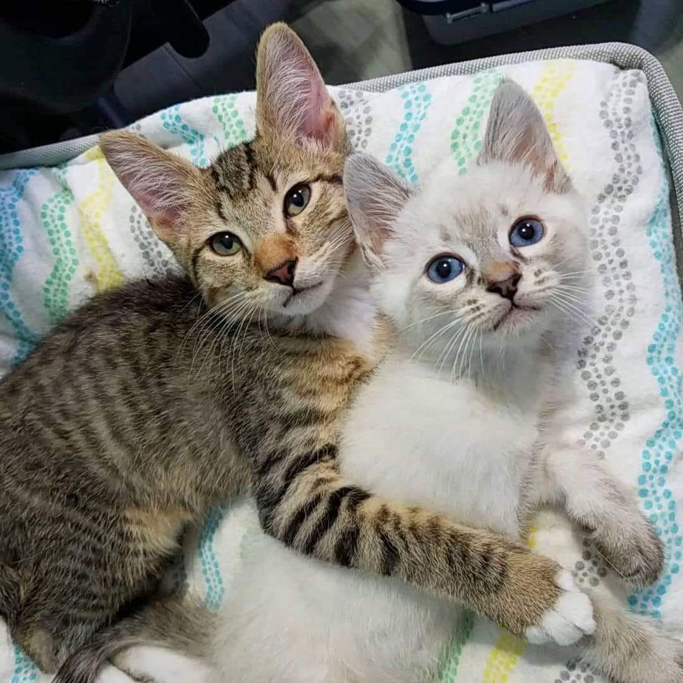 bromance kittens, cuddle kittens