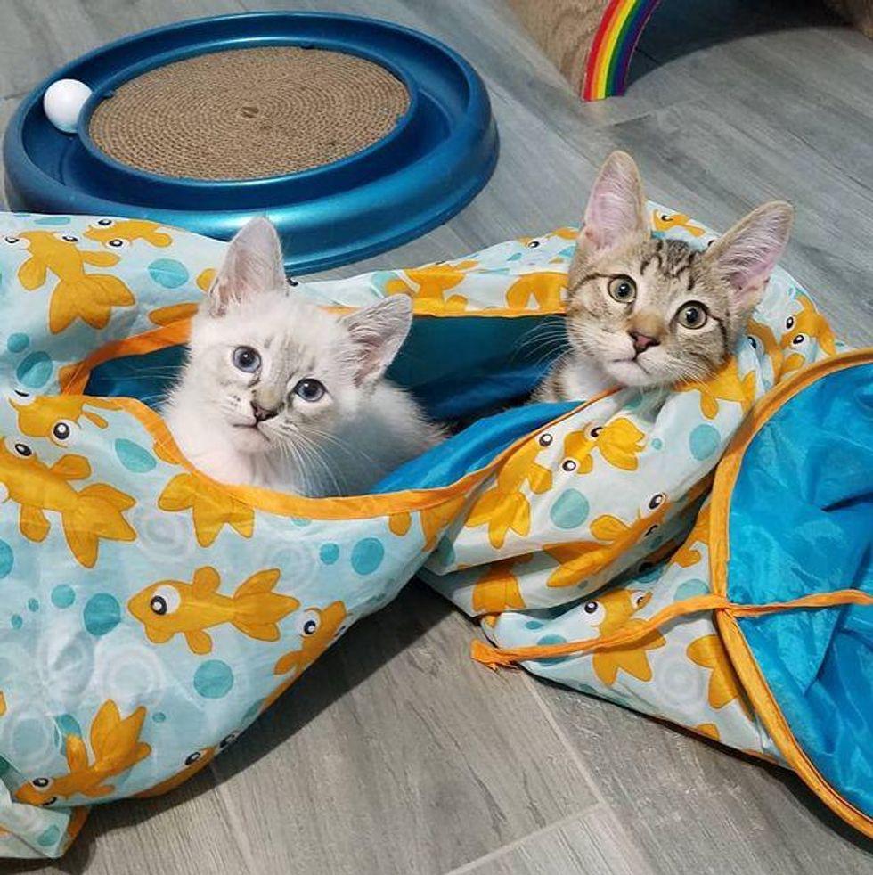 kitten tunnel