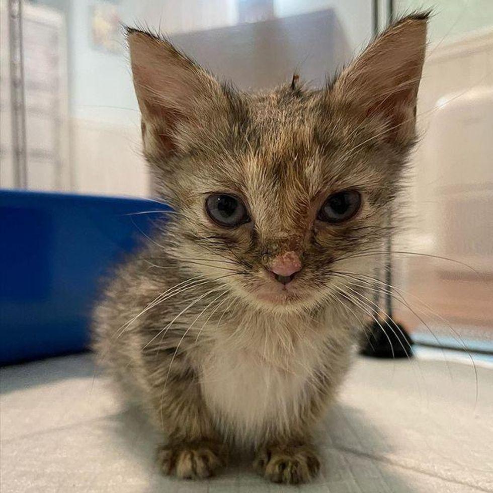 sassy kitten, cattitude