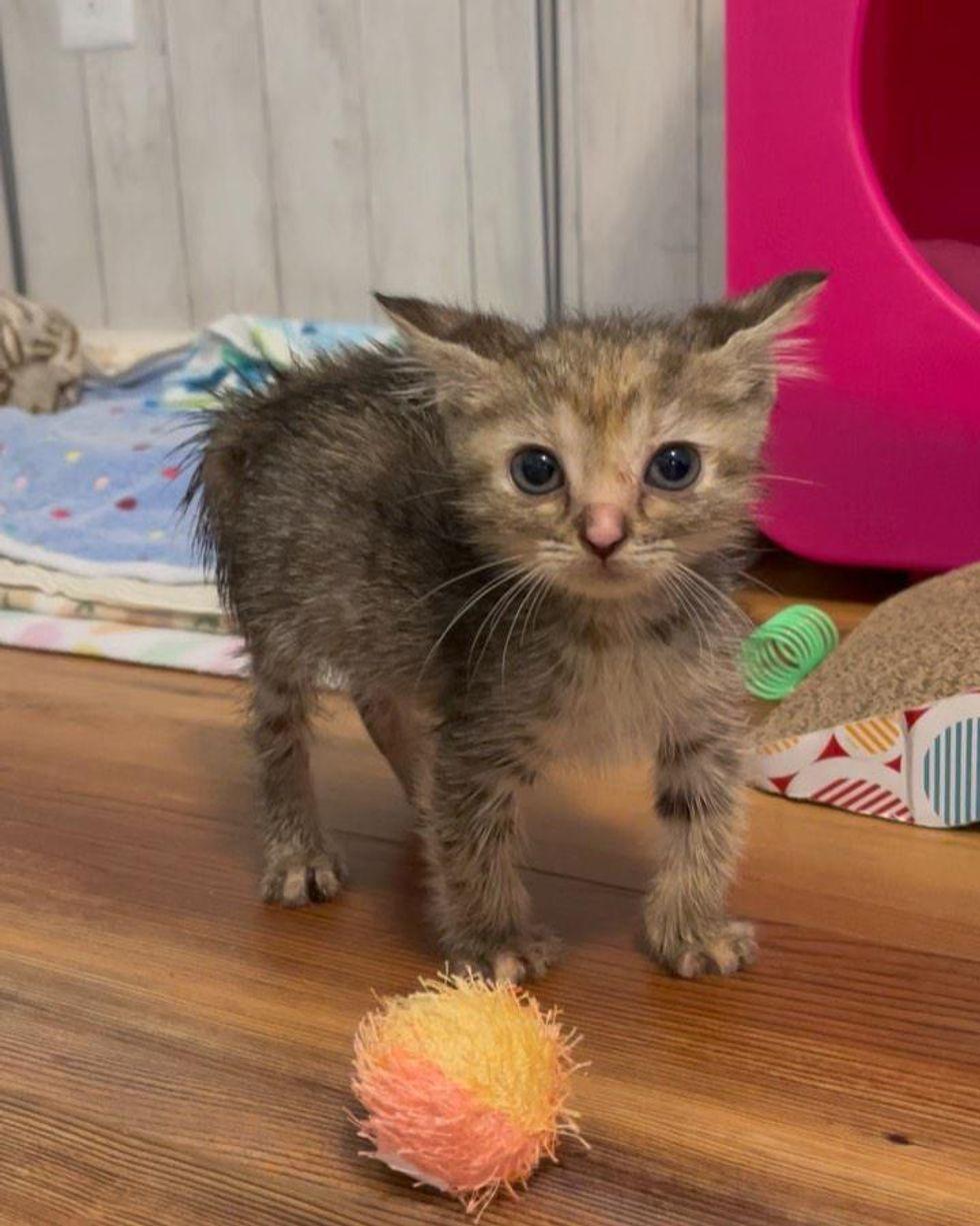 sassy kitten hair up