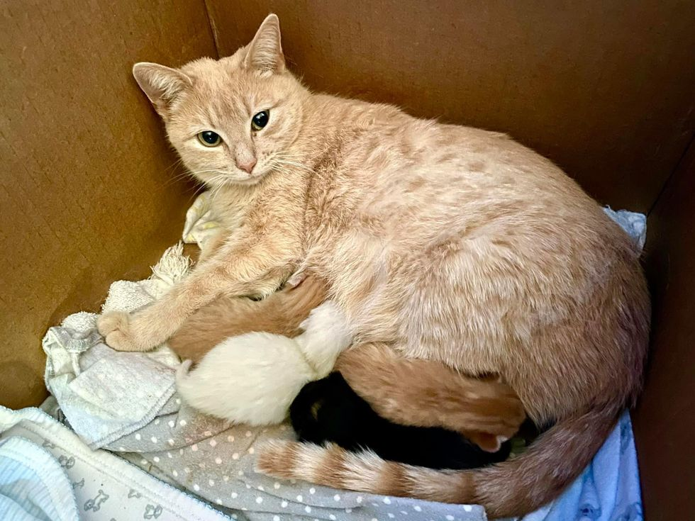cat mom and kittens