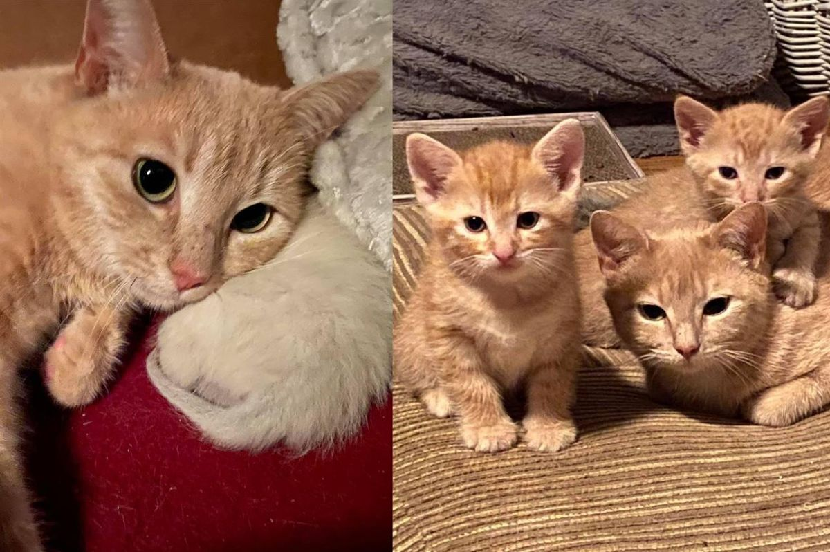 Resilient Street Cat Ensures Her Kittens Live and Hopes for Home with Her Bonded Son