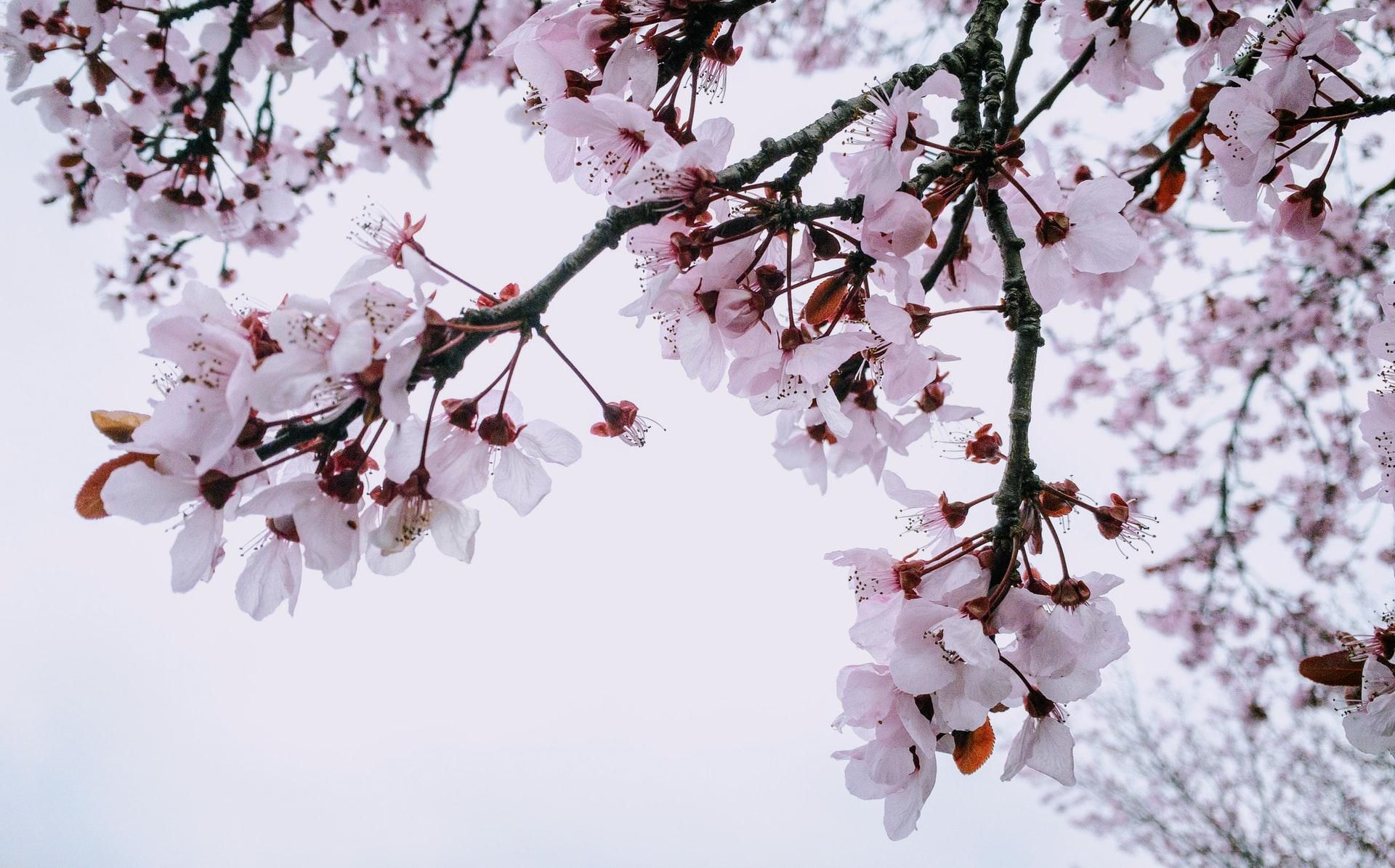 How to identify trees by looking at their flowers