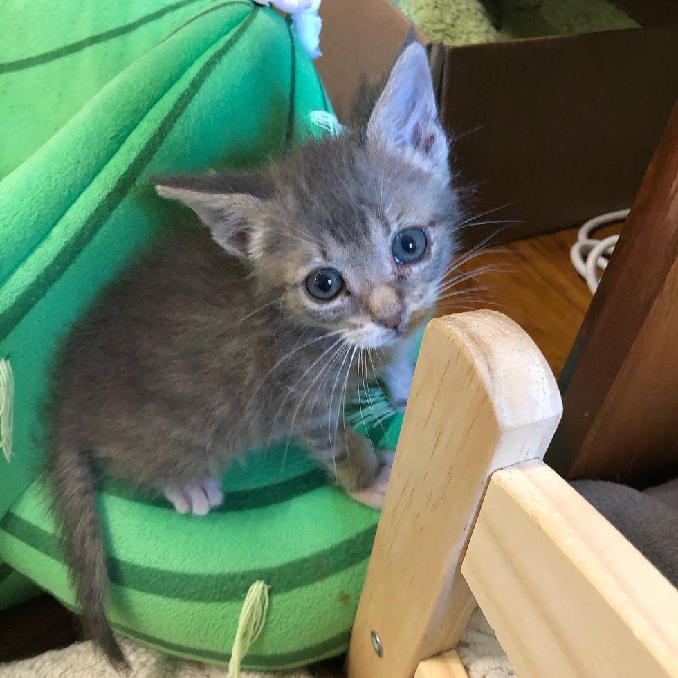 sweet kitten eyes