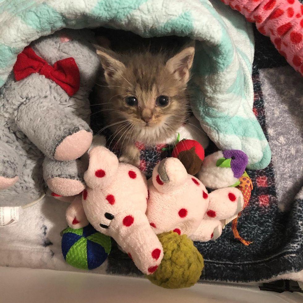 kitten cuddle toys