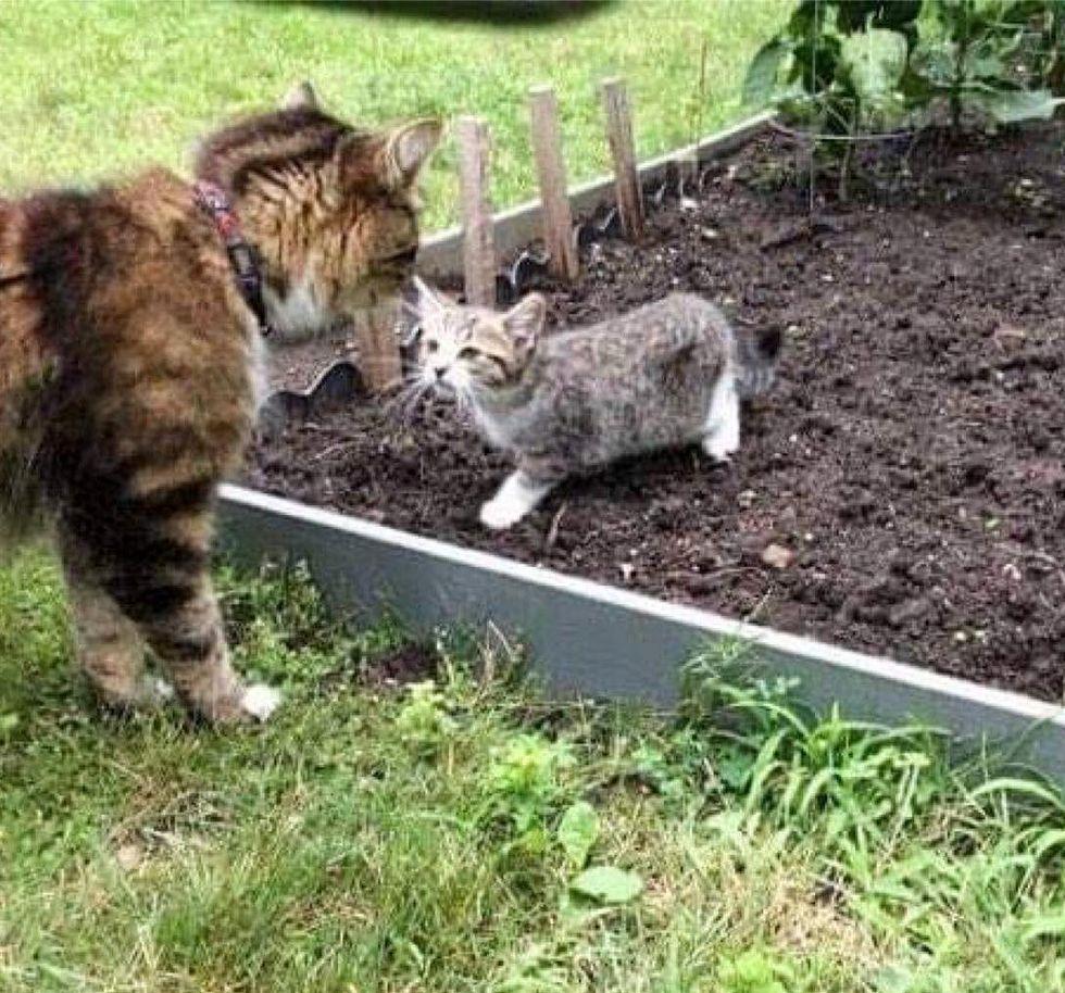 jardin de chaton errant