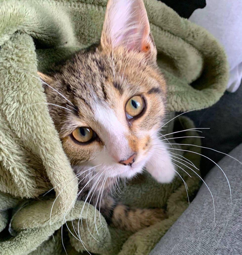 couverture de chaton