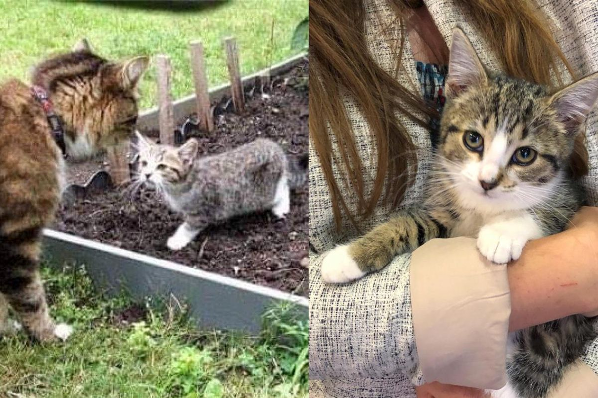 Kitten Wandered into Family Garden and Befriended Their Cat, She Came Back to Leave Streets Behind