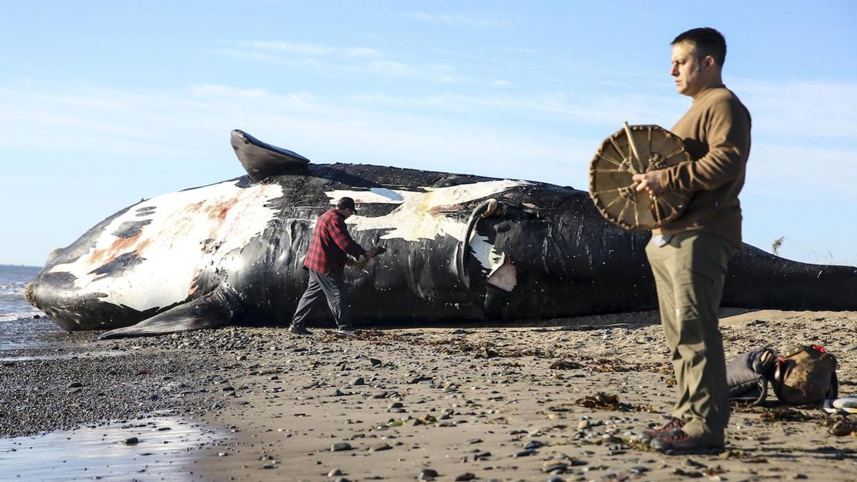 A ceremony for a dead right whale.