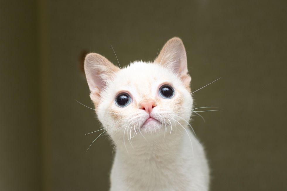 wobbly kitten, big eyed kitten