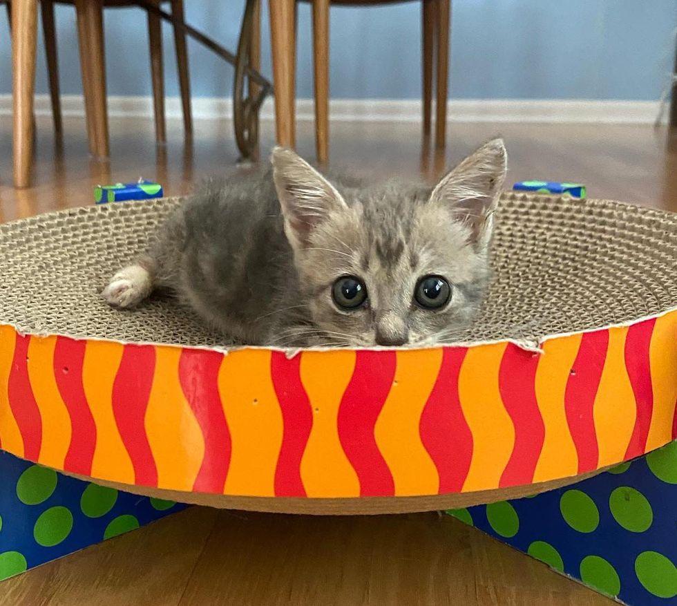hide and seek kitten