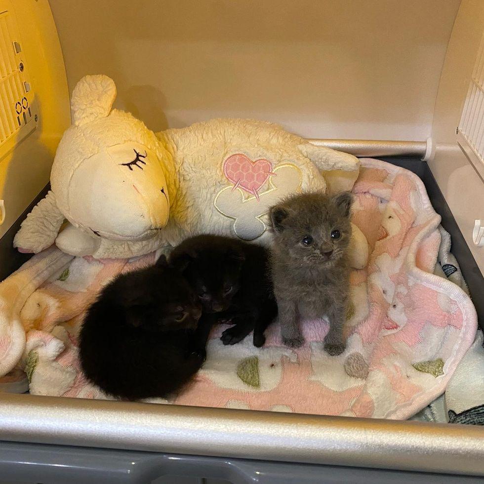 kittens tiny