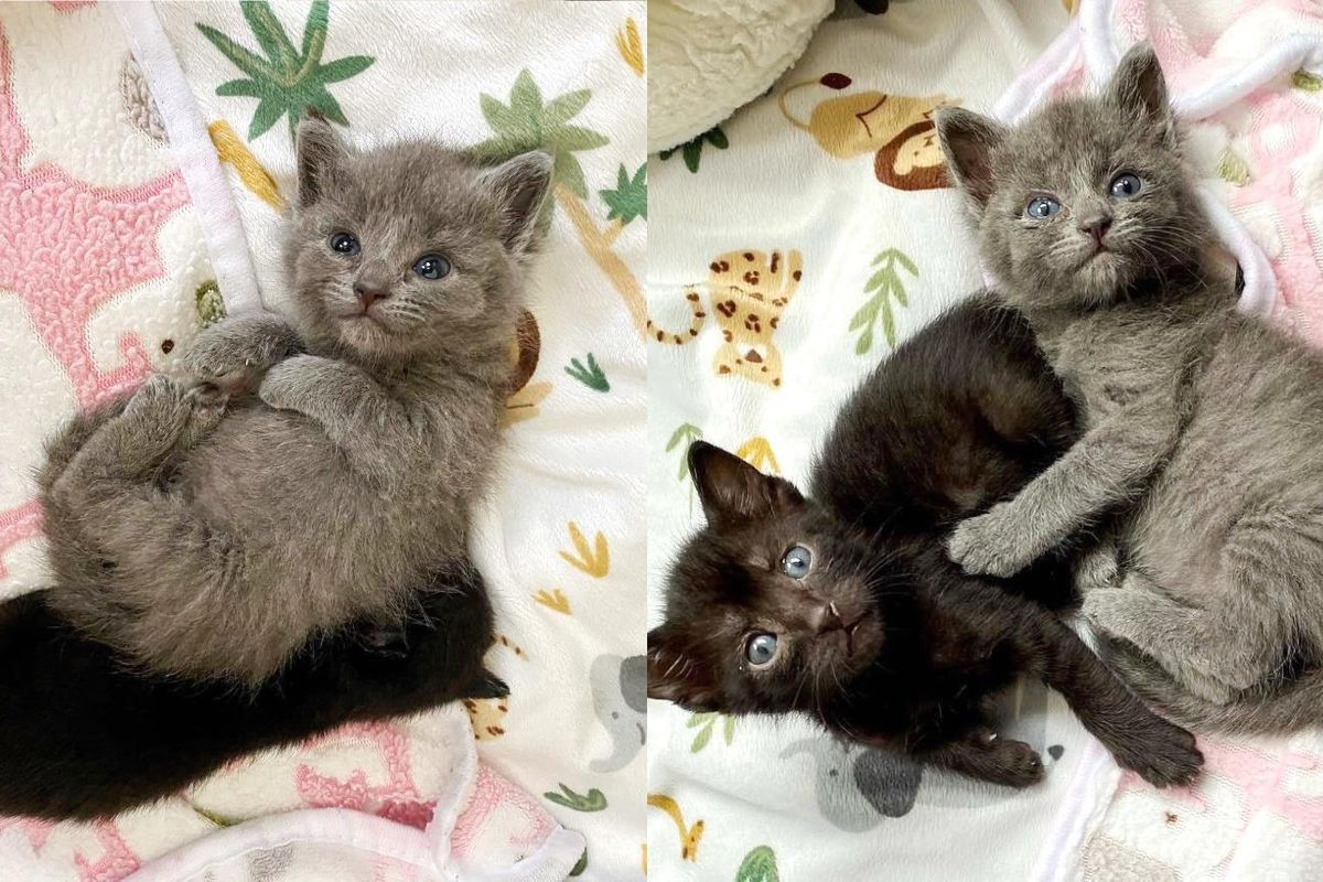 Kitten Found by Herself Takes to Two Other Younger Kittens and Showers Them with Hugs