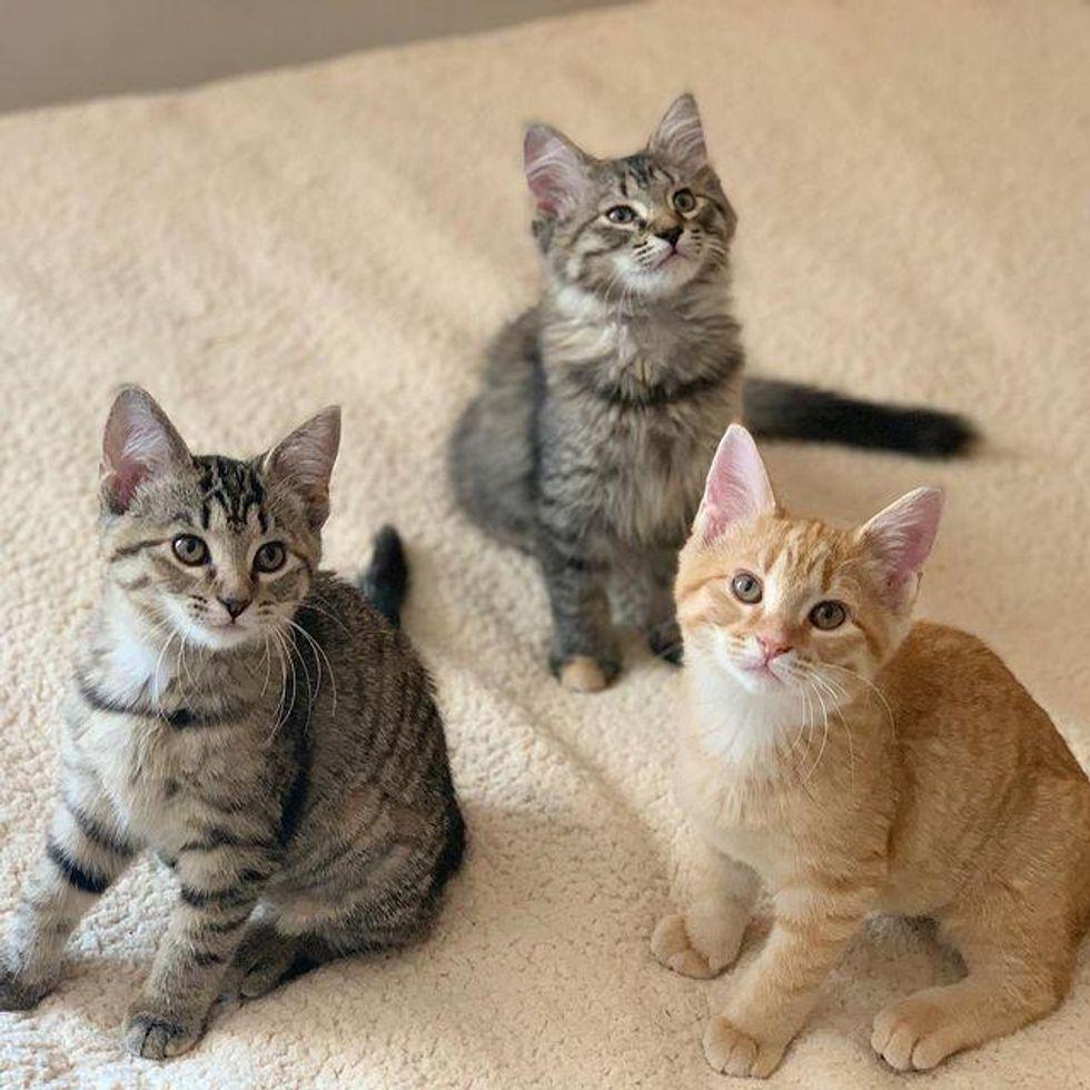 chatons triple adoption