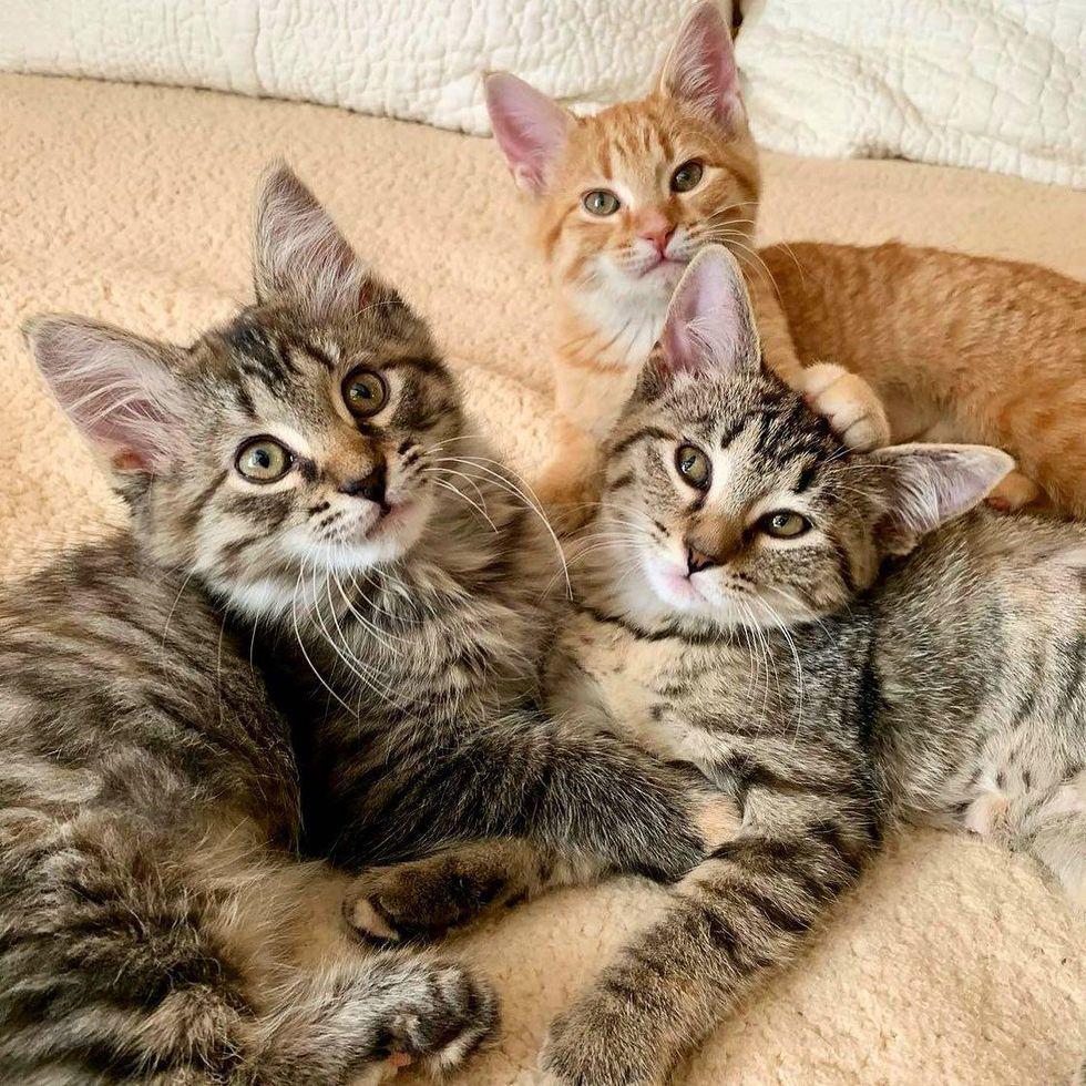 trois chatons frères et sœurs