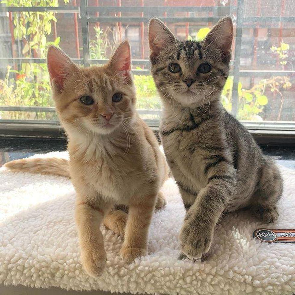 chatons par fenêtre