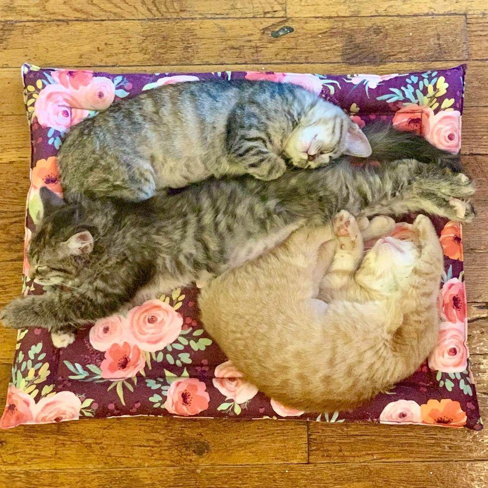 chatons en trio endormi