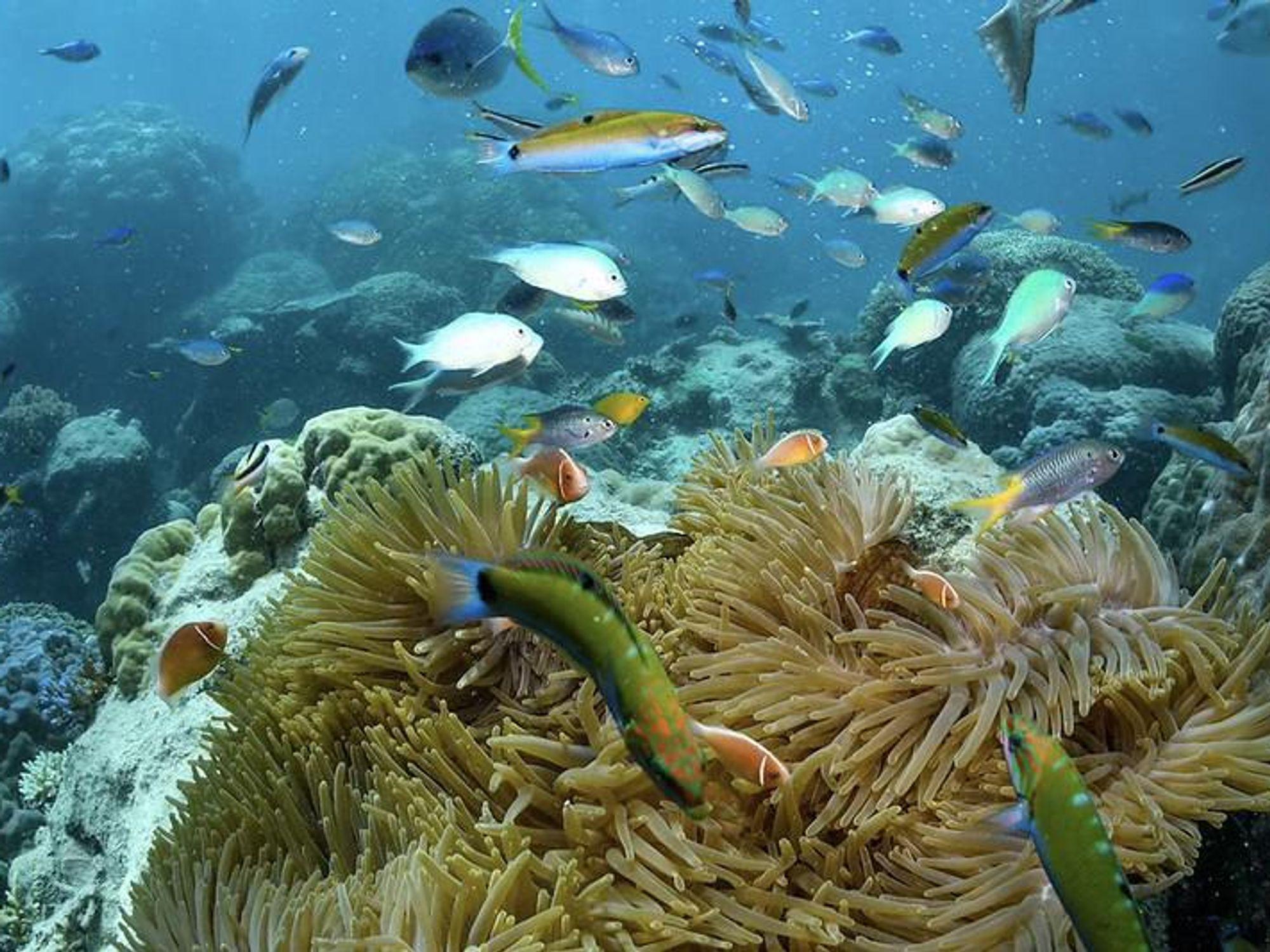 Mining billionaire hopes multi-million dollar research centre will reverse reef's decline